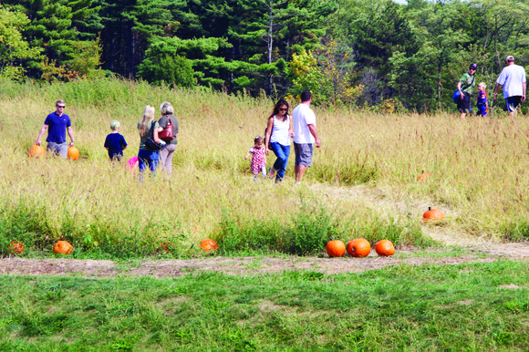 Like the pumpkins they sell, farms where parents can bring their kids to pick out their own jack o' lantern ...