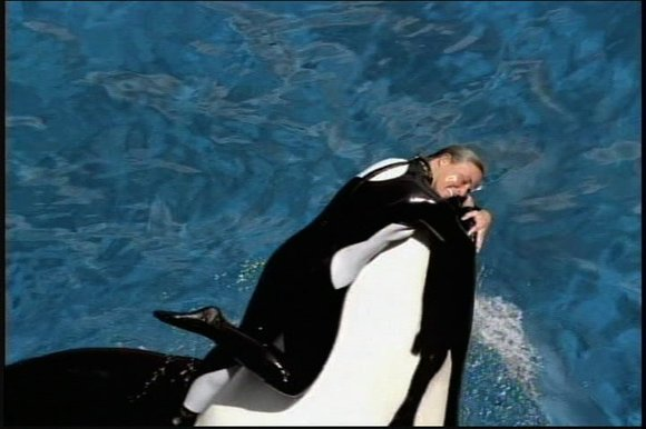 "Nearly 21 million people watched ""Blackfish"" when it aired on CNN last October. The documentary, produced by Magnolia Pictures and ..."