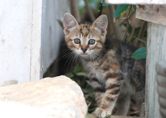 Feral cats, unlike strays, have been born and raised in the wild or have been abandoned and must revert back ...