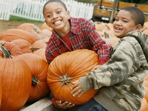 Take the children for fall fun at a local Pumpkin Farm!