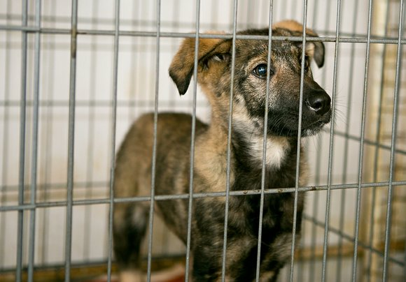 Supporters of a law that would restrict the sale of dogs and cats from large scale mill breeders will try ...