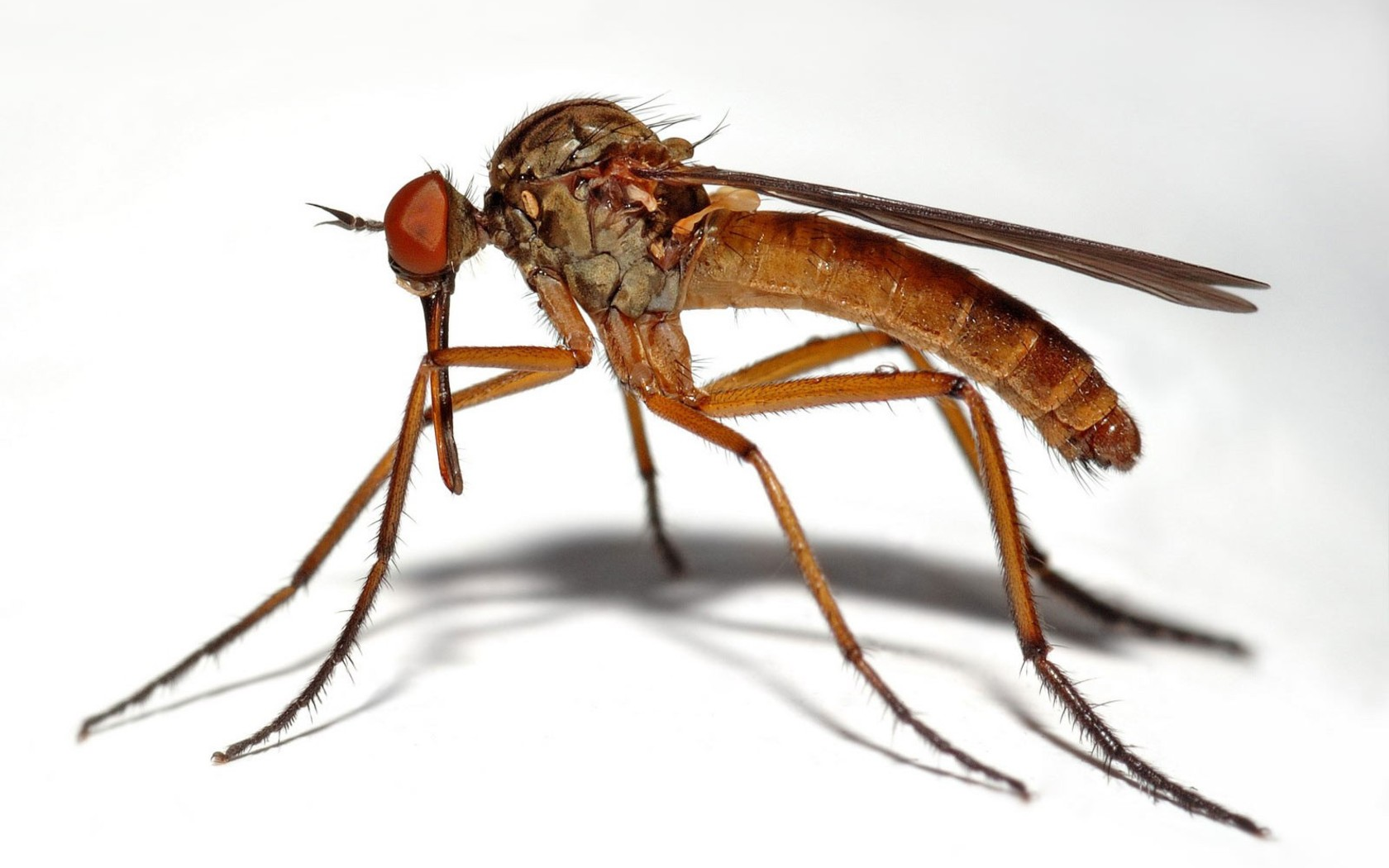 relationship between mosquito breeding and environment The results of this study showed a correlation between certain environmental  parameters and mosquito larvae abundance, and these.