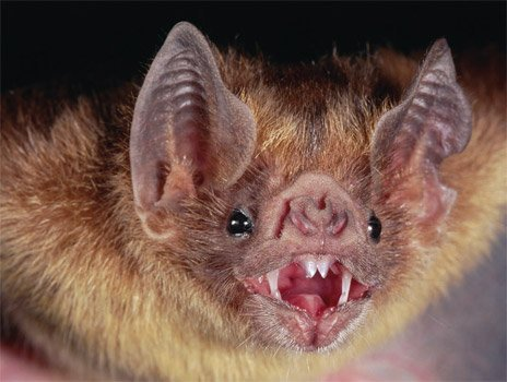 The bat was found in a residence on August 30 in the 700 block of Oakland Avenue in Joliet.