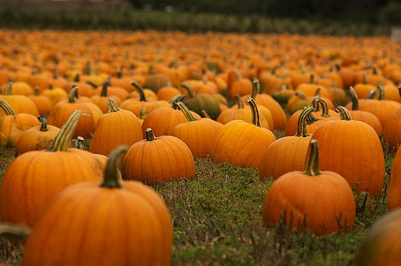 For Will County residents looking to celebrate the beginning of fall with a good scare or maybe a more bucolic ...