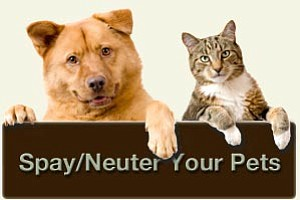 Will County residents who have their pets spayed or neutered at participating veterinary offices in October can receive a $40 ...