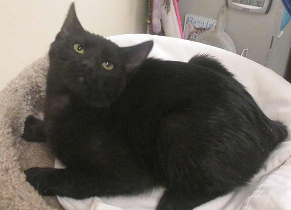 SMOKEY Smokey is sweet and loving, but shy. She likes people, but it takes a little while for her to ...