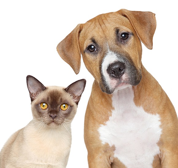 Will County residents who have their pets spayed or neutered at participating veterinary offices in February can receive a $40 ...