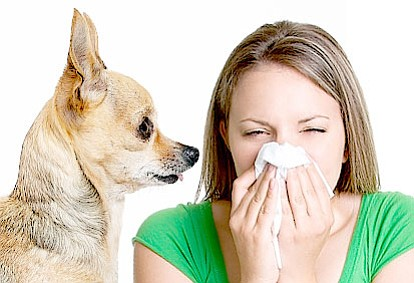 Allergies are among the most chronic conditions worldwide, according to the American Academy of Allergy Asthma & Immunology. Though many ...