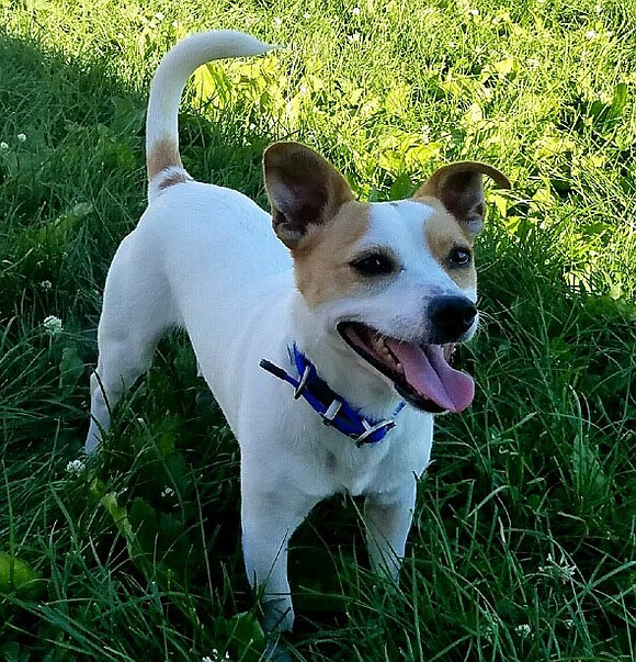 JAKE Jake is a very good, calm boy that loves a combination of lap time and play time – chasing ...