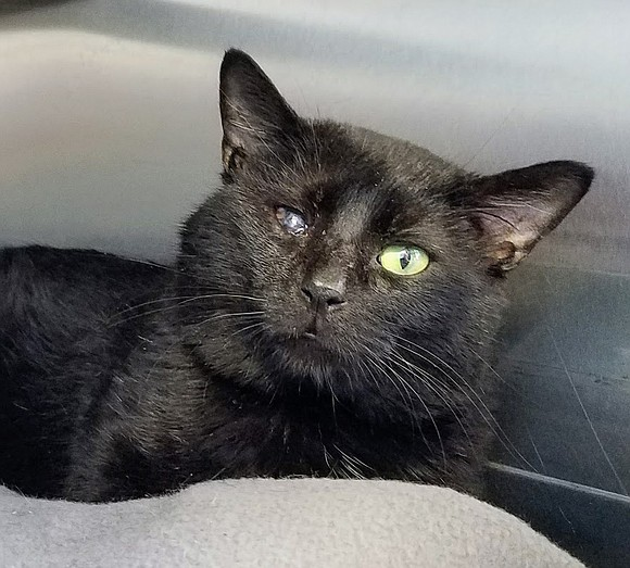 NICKIE Nickie is a front-declawed cutie and such a gem, who doesn't at all act her age! She's fun and ...