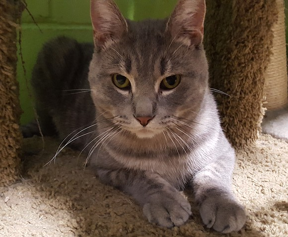 SOLO Solo is adorable and friendly. He loves affection and likes being petted, especially around his checks. He's a 1-year-old, ...