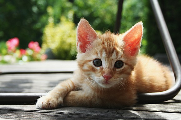 Feral cats may look cute and cuddly, but they are a lot different than a typical house cat. While feral ...
