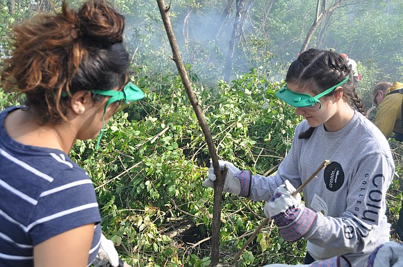 If you've been thinking about joining a Forest Preserve District of Will County volunteer workday, now is the perfect time ...