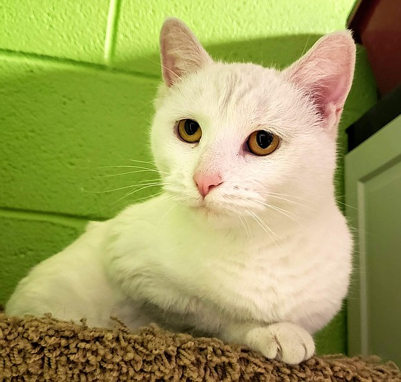 SERENDIPITY Serendipity is a very sweet and adorable cat who is comfortable with people and loves getting attention and affection. ...