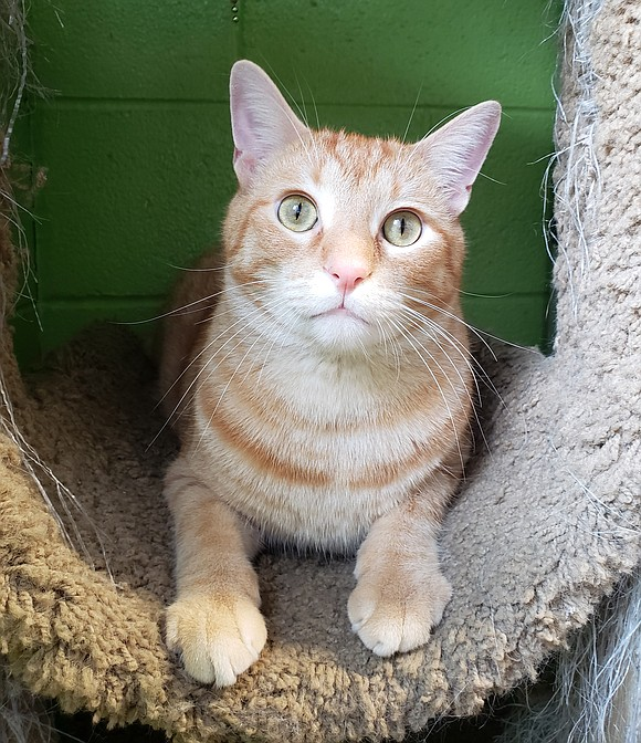 DUNKIN Dunkin is a big, beautiful guy with a ton of energy and lots of personality. He's outgoing, confident and ...