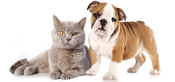 Will County residents who have their pets spayed or neutered at participating veterinary offices in September can receive a $40 ...