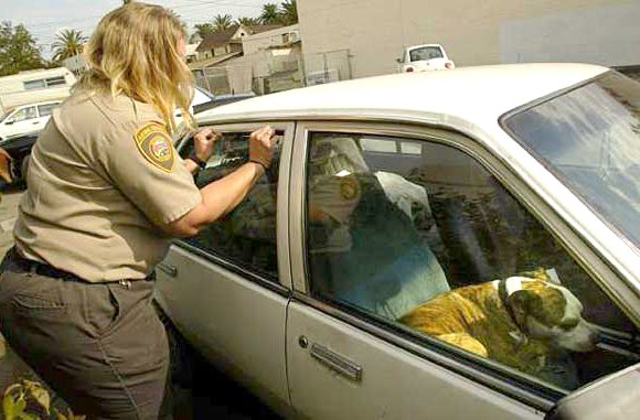 TORRANCE, Calif. — A 1-year-old female mixed breed dog was removed from an unattended SUV at a park-and-ride lot in ...