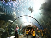 New Orleans Audubon Aquarium