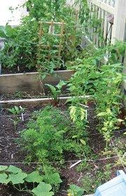 A flourishing backyard garden