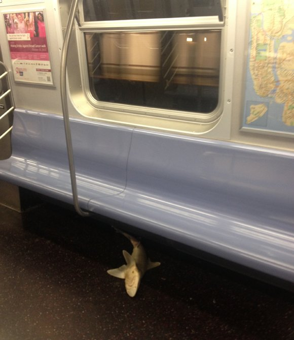 NEW YORK, N.Y. — Commuters encountered an unexpected passenger when they boarded a New York City subway train early Wednesday: ...