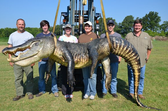 Meet the hunting party of Beth Trammell of Madison, MS. According to Ricky Flynt, their gator (shown) was taken in the early hours of Sunday, September 1, 2013, in Issaquenna County in the Yazoo Diversion Canal north of Redwood, MS. It was 13 feet 5.5 inches and weighed 723.5 pounds. It broke the previous record of 697.5 pounds.