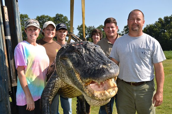 Meet the hunting party of Beth Trammell of Madison, MS. According to Ricky Flynt, their gator (shown) was taken in the early morning hours of Sunday, September 1, 2013, in Issaquenna County in the Yazoo Diversion Canal north of Redwood, MS. It was 13 feet 5.5 inches and weighed 723.5 pounds. It broke the previous record of 697.5 pounds.
