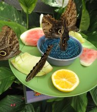 The Sertoma Butterfly House & Marine Cove features over 800 beautifully patterned and delicate butterflies