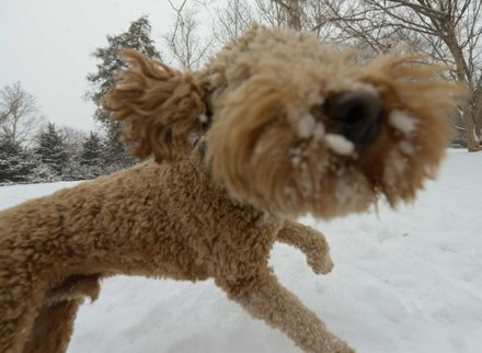 """Apollo"" romps through Meridian Hill Park in Northwest on Monday, March 3, after a massive snowstorm hit the region."