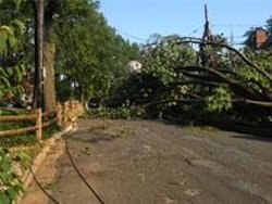 D.C. Mayor Vincent Gray signed into law infrastructure legislation to creating a public-private partnership to bury overhead primary power lines, ...