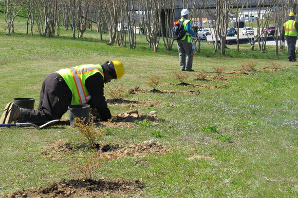Hundreds of trees and shrubs are finding a home on the banks of the entrance and exit ramps at Bouldercrest ...