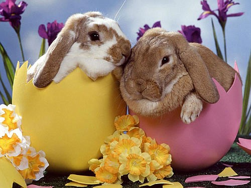 Easter Bunny Was The Bunny Before The Egg Houston Style Magazine