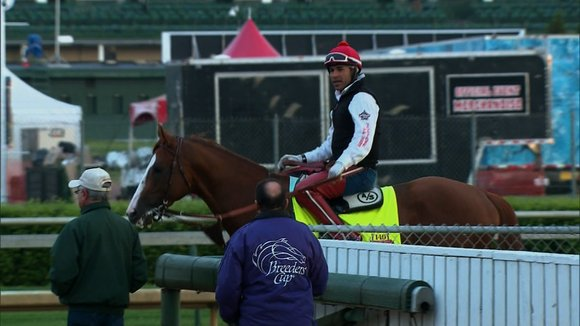 Skechers USA is placing a big bet on California Chrome by sponsoring the horse at the Belmont Stakes. The chestnut ...