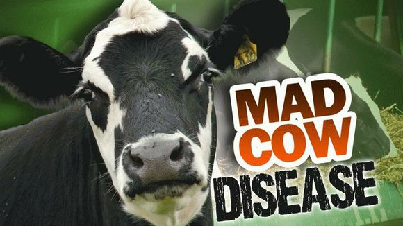 Here's a look at what you need to know about Mad Cow Disease, a transmissible fatal brain disease found in ...