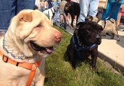 Dogs of all sizes, species and wrinkle counts attend a ribbon cutting ceremony on Saturday for the Rock Run Dog Park in Joliet.