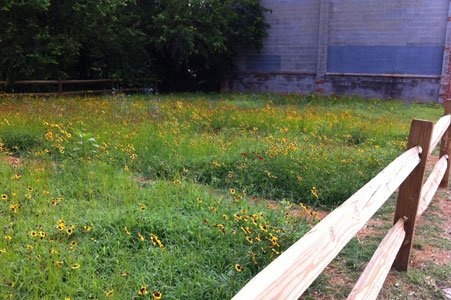 Maryland inmates are sprucing up and testing special wildflowers and grasses in eight vacant West Baltimore sites as part of ...