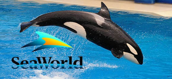 SeaWorld isn't having a whale of a good time these days.