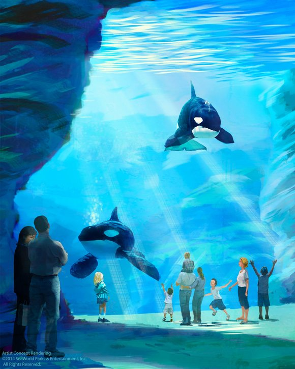 The move comes amid a backlash following the release of Blackfish, a documentary aired by CNN that examined SeaWorld's treatment ...