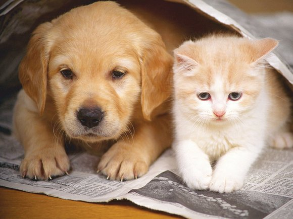 Pet lovers can add a puppy, dog, kitten or cat to their household at reduced fees in August during the ...
