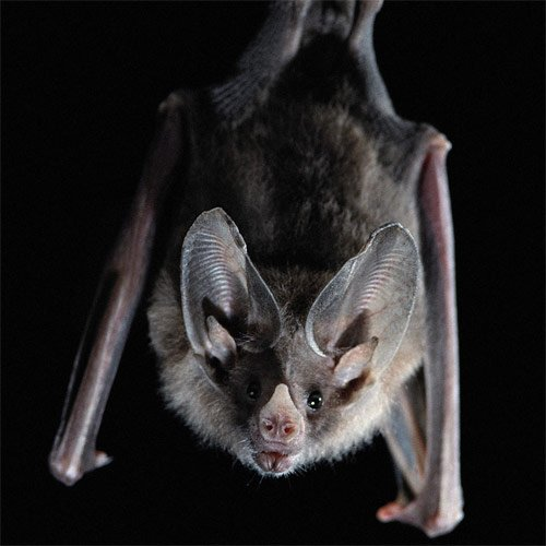 Bats found in Naperville and Frankfort represent Will County's newest wildlife rabies confirmations for 2015. The Will County Health Department ...