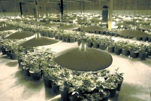 Proposed Medical Pot Cultivation Center Gets Joliet Permit