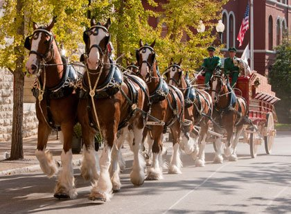 Celebrate the opening weekend of the Waterfront Partnership Ice Rink with a parade featuring the world renowned Budweiser Clydesdale Horses ...
