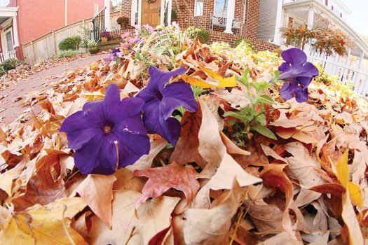 Flowers stand out from fall leaves in West End.