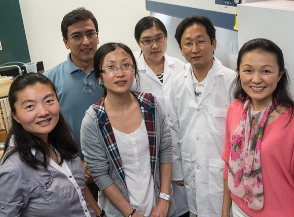 The lowly roundworm is the star of an ambitious Rice University project to measure the toxicity of nanoparticles.