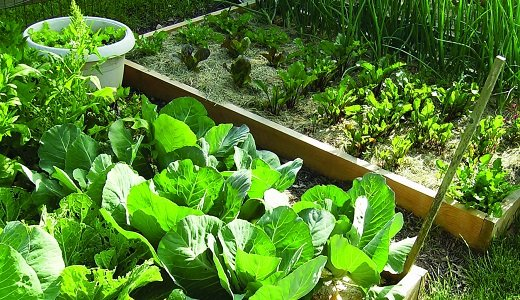 Planting a garden from scratch can sound like a daunting task, especially for those who are new to the hobby. ...