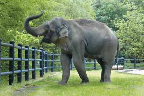 Rama, a 31-year-old Asian elephant known for his sweet disposition and Jackson Pollock-like painting technique, was humanely euthanized at the ...