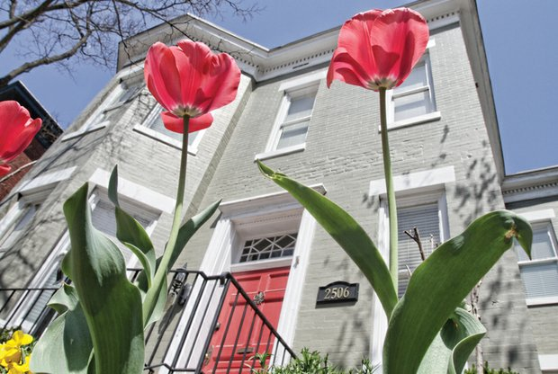 Lofty tulips in the West End