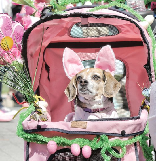 Summer Rain sports rabbit ears and other doggie finery Sunday at the popular holiday event on Monument Avenue. The 4-year-old beagle was people-watching with her owner, Jennifer Desanto.