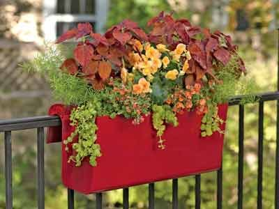 Brighten up your patio, deck or front entrance with containers. They're an excellent way to add color, fragrance and beauty ...