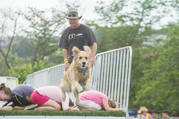 Young people help create hurdles for a racing dog. Venture Richmond and Sports Backers staged the event with support from Dominion Resources.
