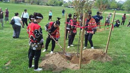 The Green Ambassador hosted a 20 Member Youth Japanese Delegation from Fukushima, Japan in 2012. They planted Cherry Blossom Trees in the historic city of Fredrick, Maryland to celebrate the centennial of the cherry tree in the United States.